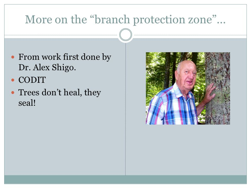 More on the branch protection zone …