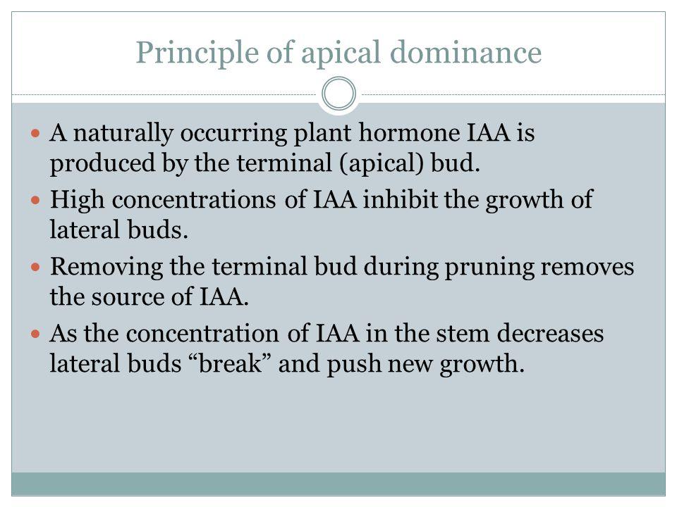 Principle of apical dominance