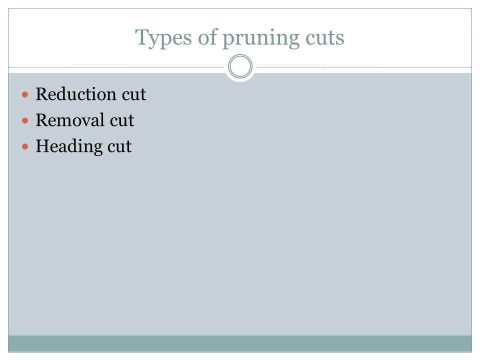 Types of pruning cuts Reduction cut Removal cut Heading cut