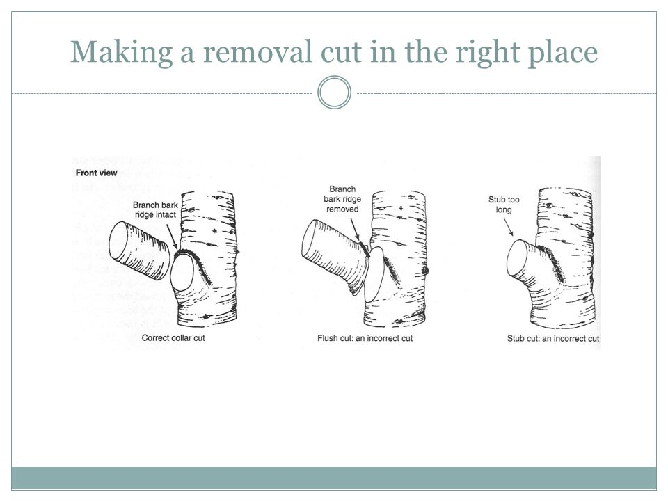 Making a removal cut in the right place