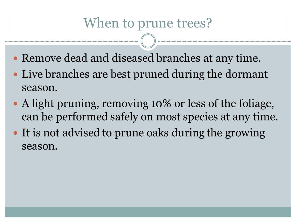 When to prune trees Remove dead and diseased branches at any time.