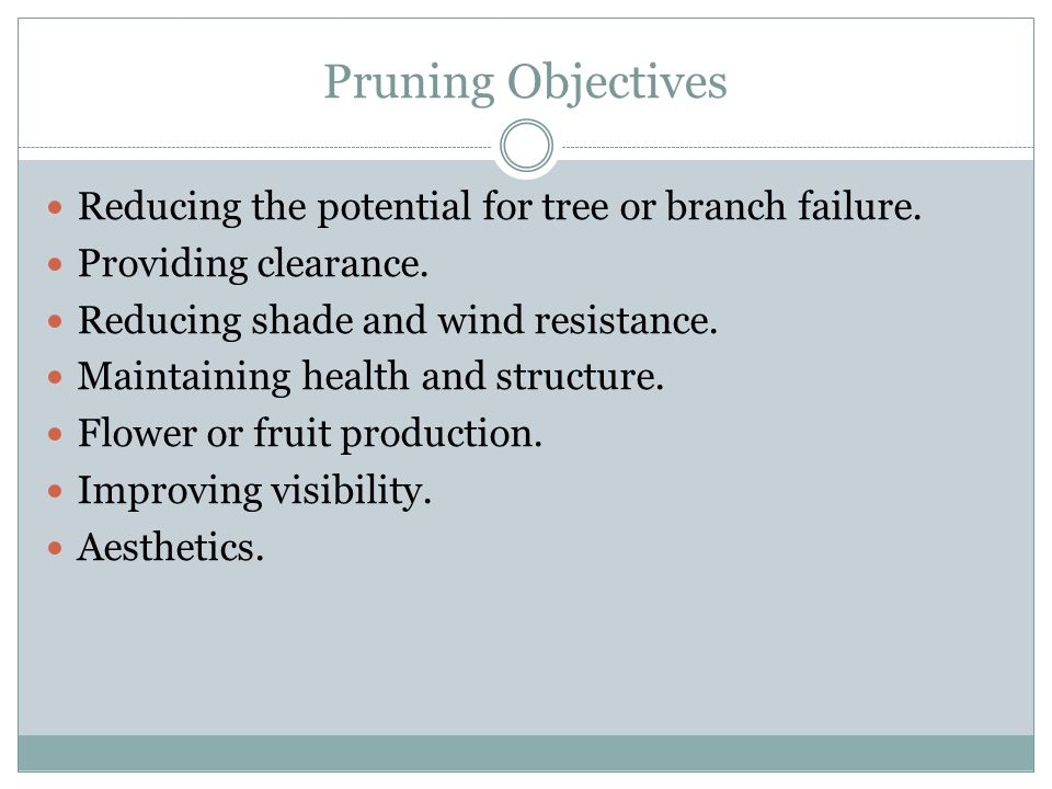 Pruning Objectives Reducing the potential for tree or branch failure.