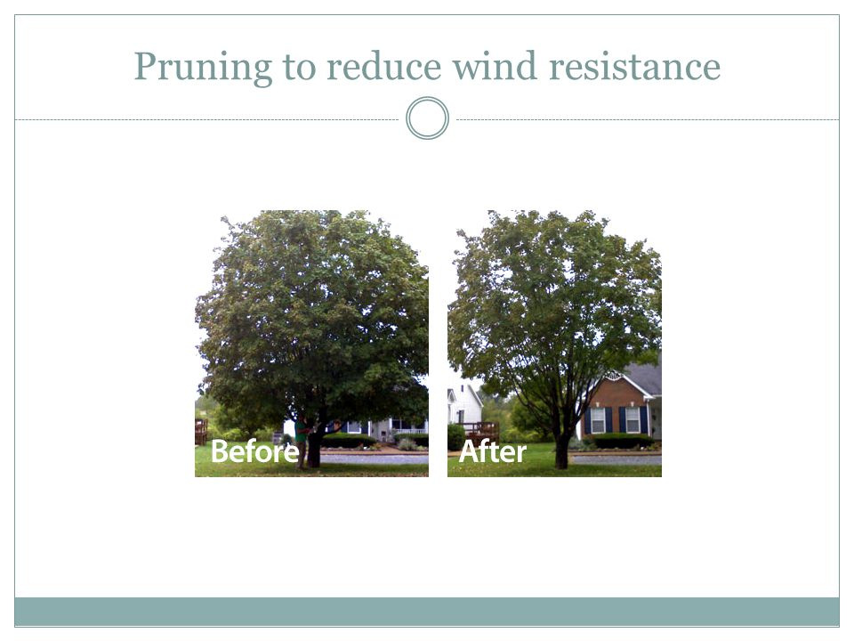 Pruning to reduce wind resistance