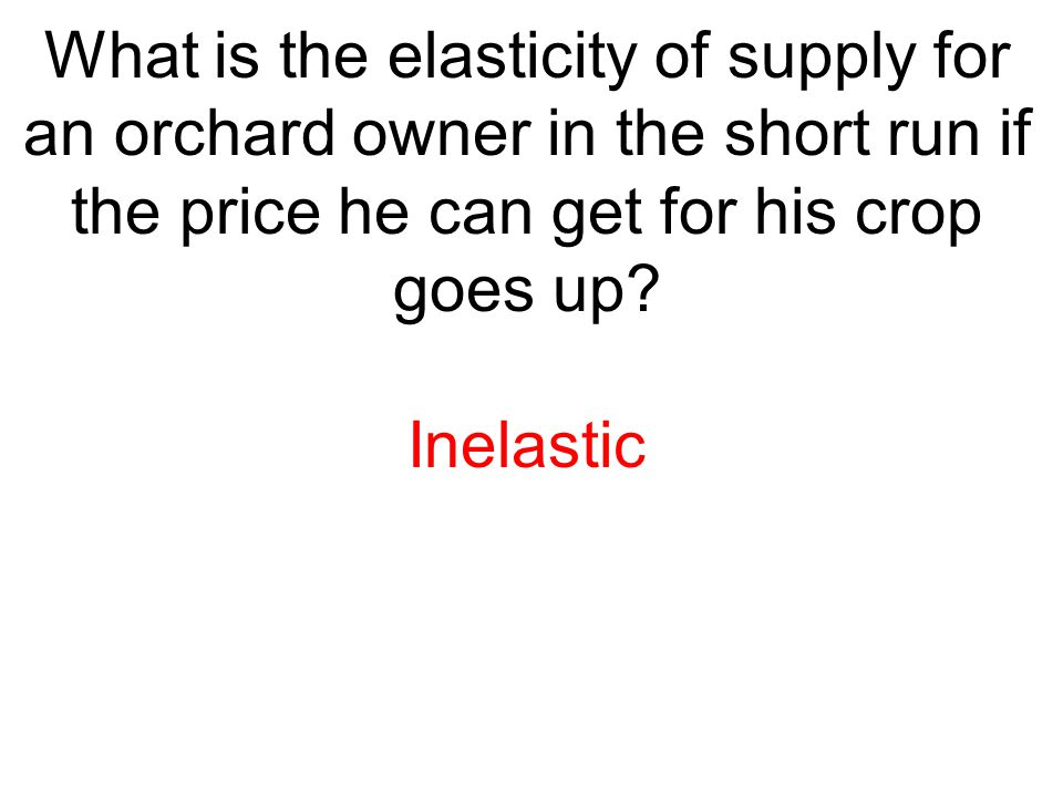 What is the elasticity of supply for an orchard owner in the short run if the price he can get for his crop goes up