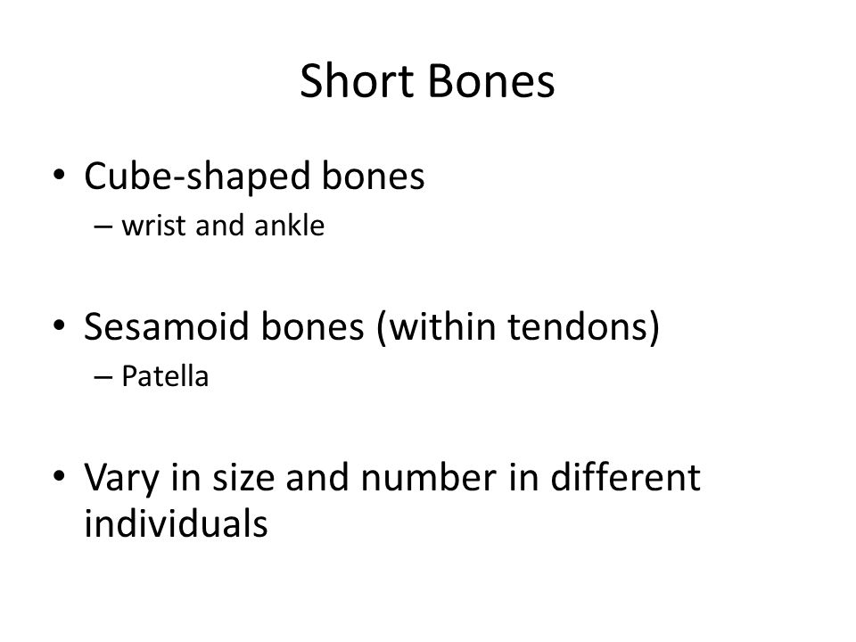 Short Bones Cube-shaped bones Sesamoid bones (within tendons)