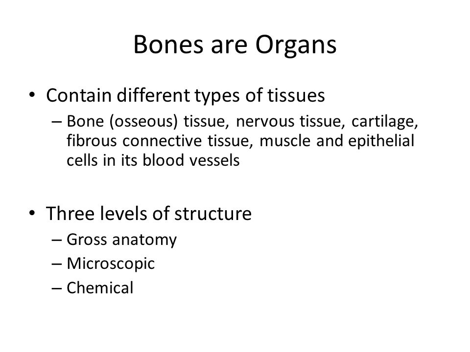 Bones are Organs Contain different types of tissues
