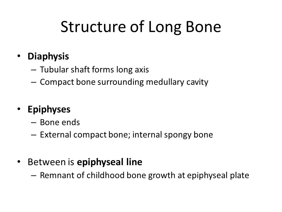 Structure of Long Bone Diaphysis Epiphyses Between is epiphyseal line