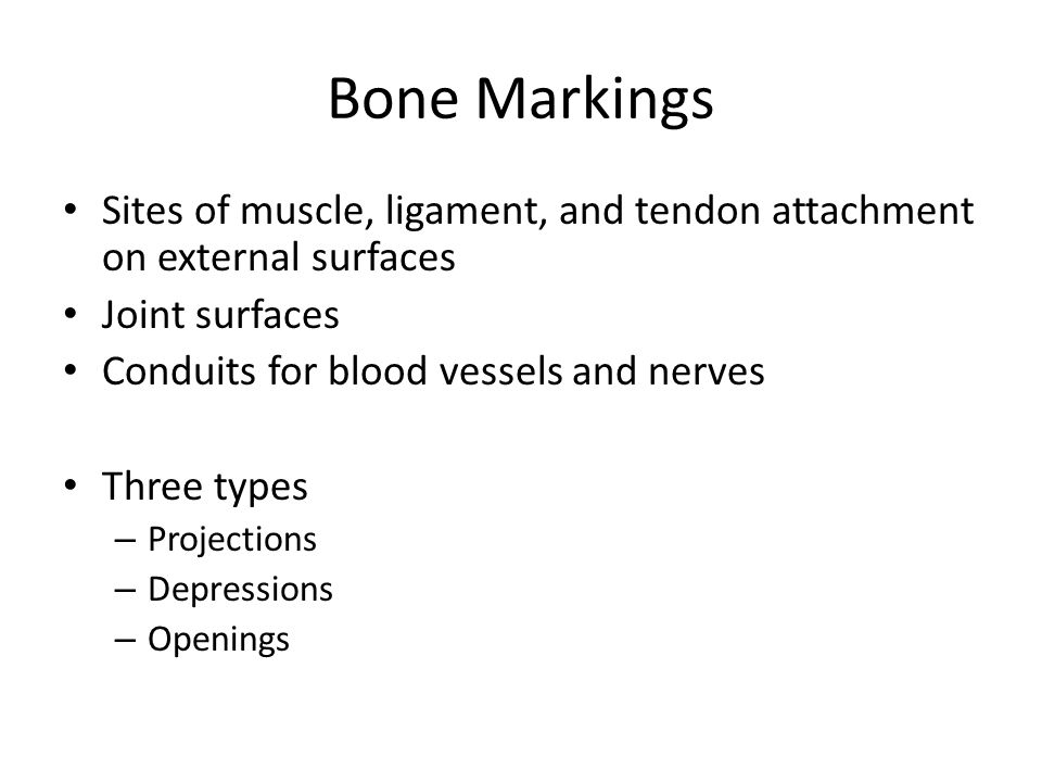Bone Markings Sites of muscle, ligament, and tendon attachment on external surfaces. Joint surfaces.