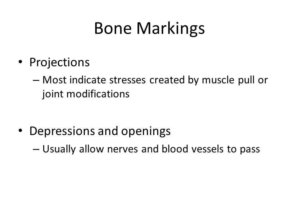 Bone Markings Projections Depressions and openings
