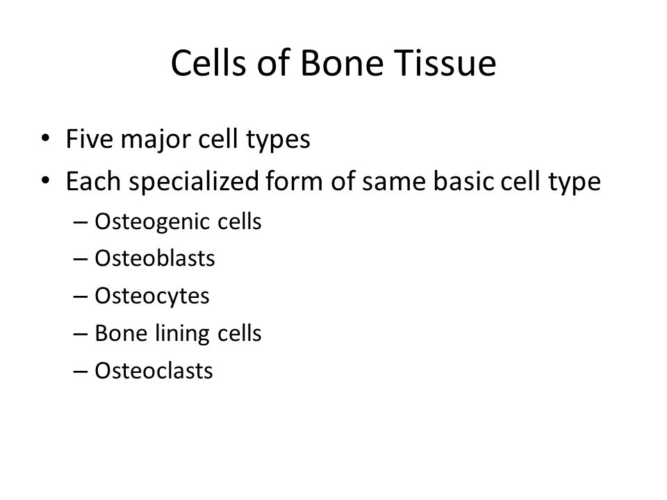 Cells of Bone Tissue Five major cell types