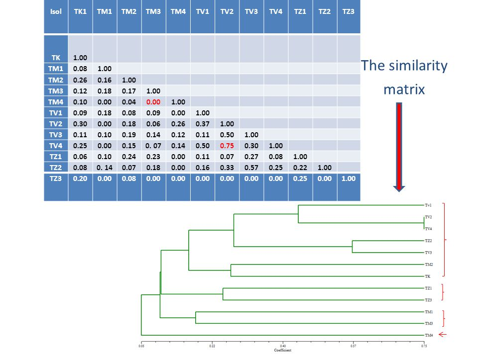 The similarity matrix Isol TK1 TM1 TM2 TM3 TM4 TV1 TV2 TV3 TV4 TZ1 TZ2