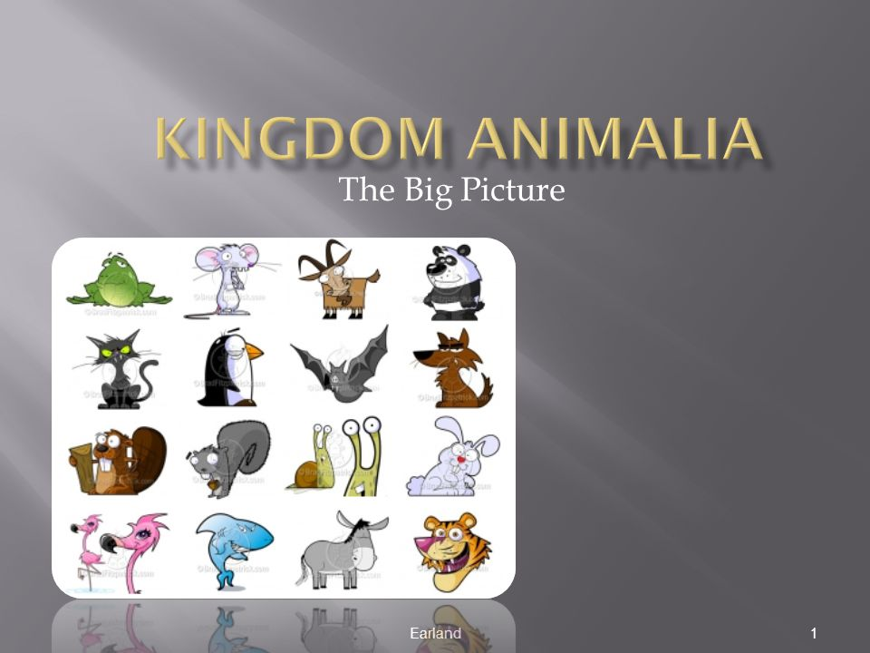 Kingdom Animalia The Big Picture Earland