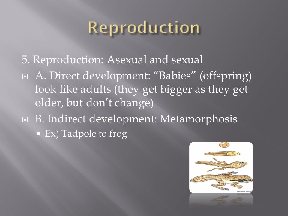 Reproduction 5. Reproduction: Asexual and sexual