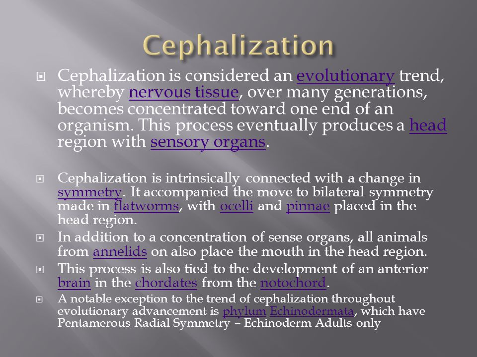 Cephalization