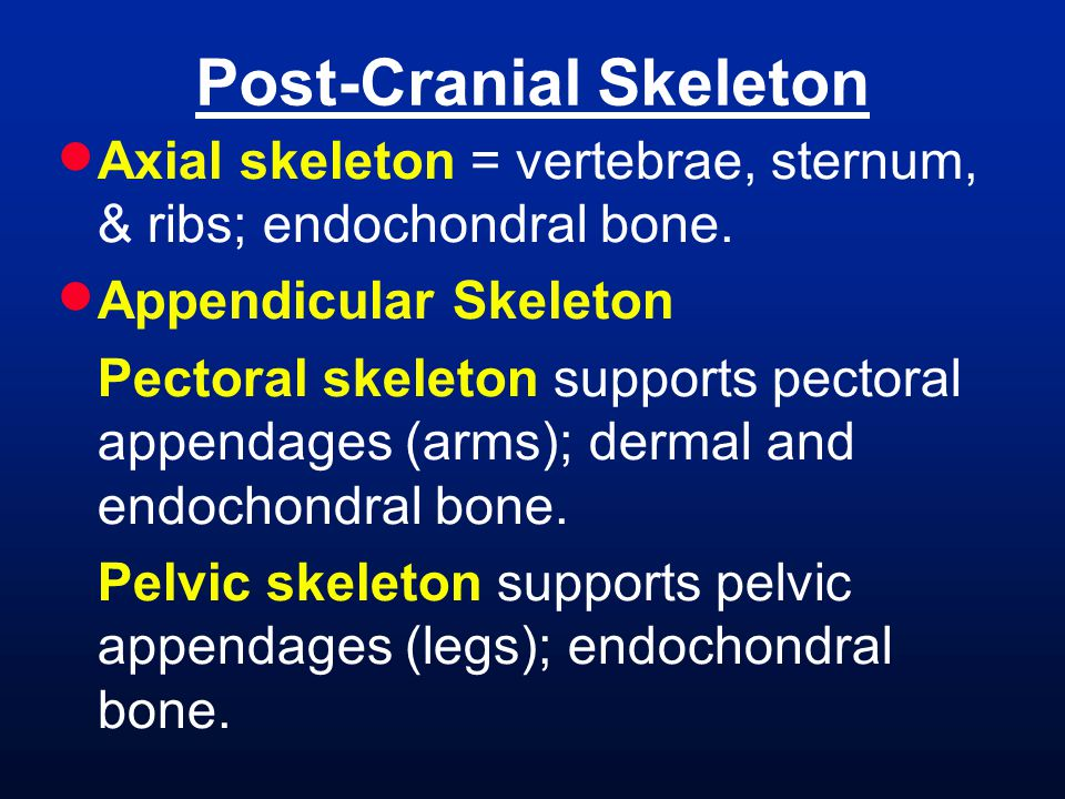 Post-Cranial Skeleton
