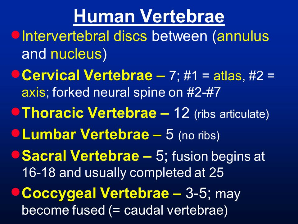 Human Vertebrae Intervertebral discs between (annulus and nucleus)