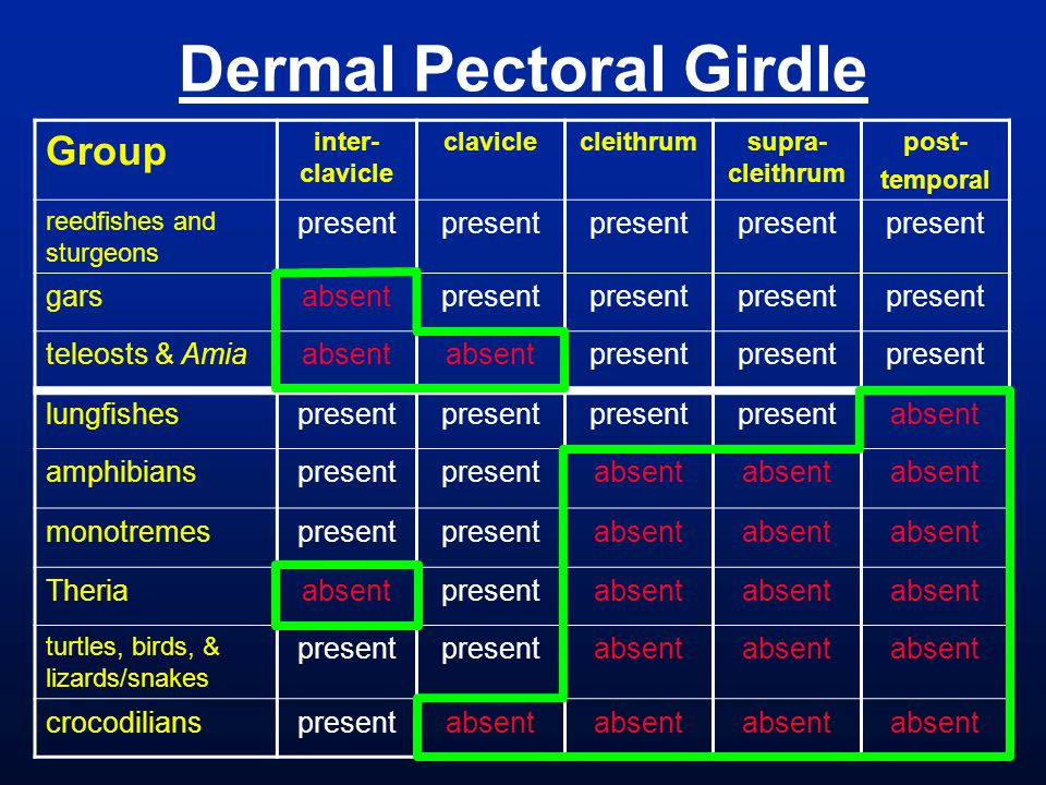Dermal Pectoral Girdle