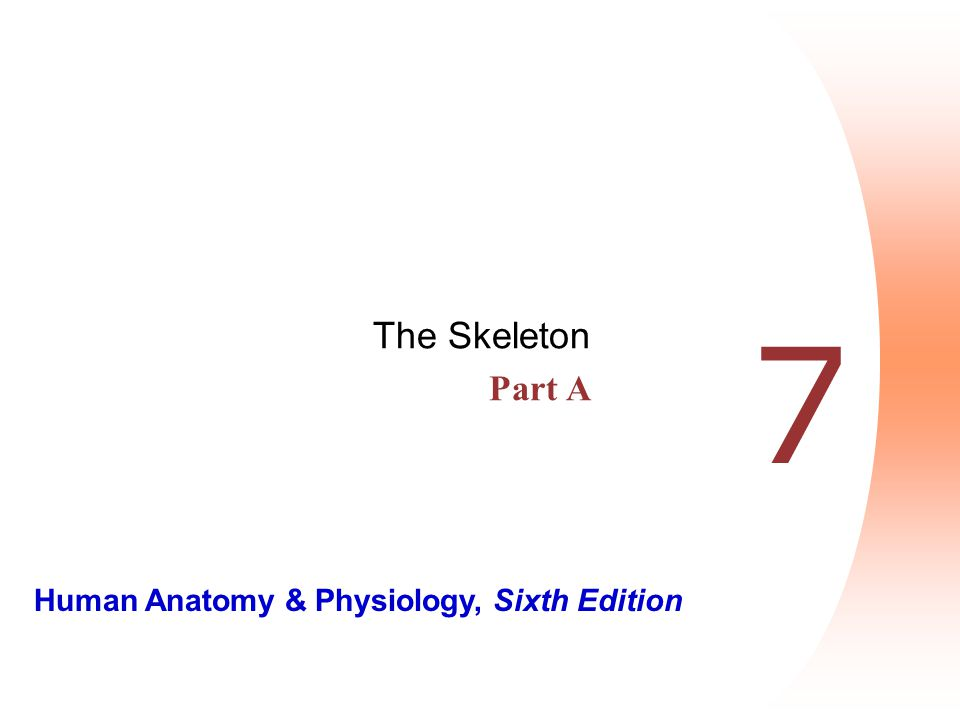 The Skeleton Part A 7