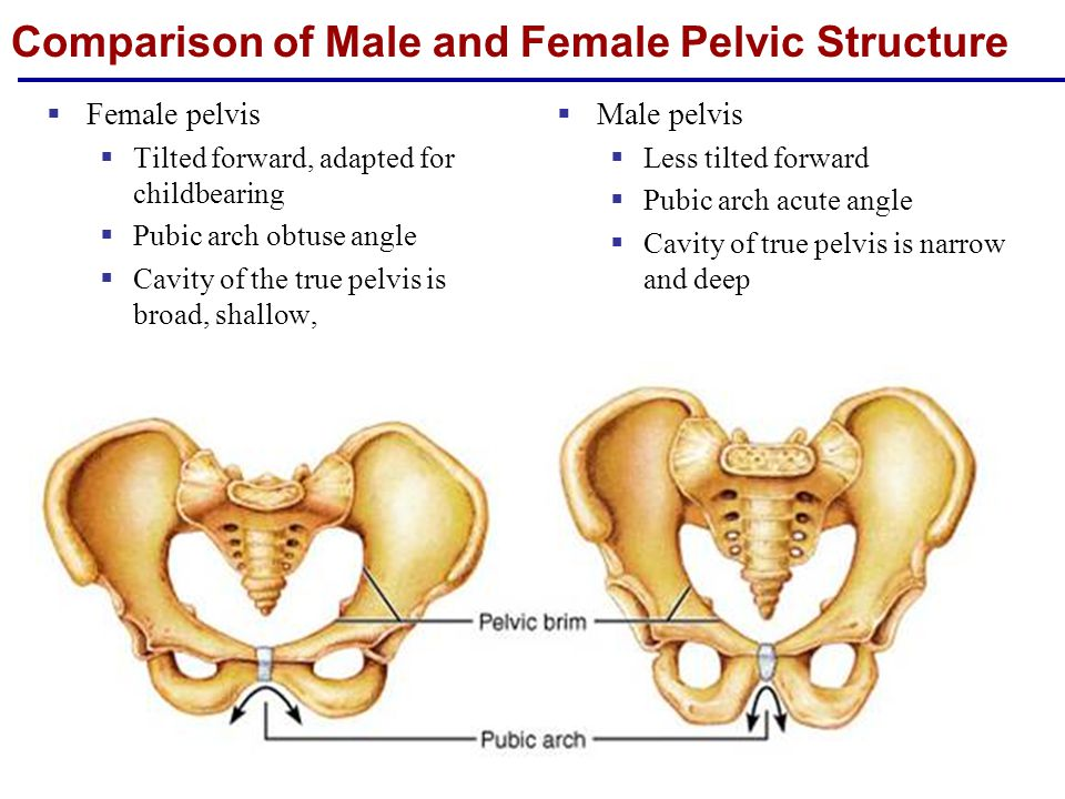 Comparison of Male and Female Pelvic Structure