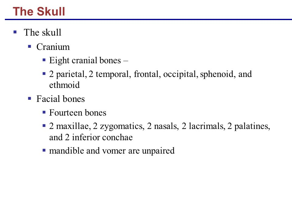 The Skull The skull Cranium Facial bones Eight cranial bones –