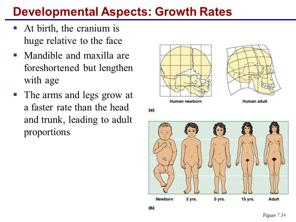Developmental Aspects: Growth Rates