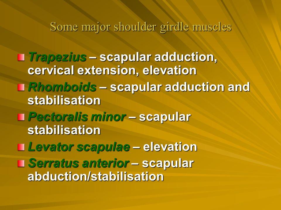 Some major shoulder girdle muscles