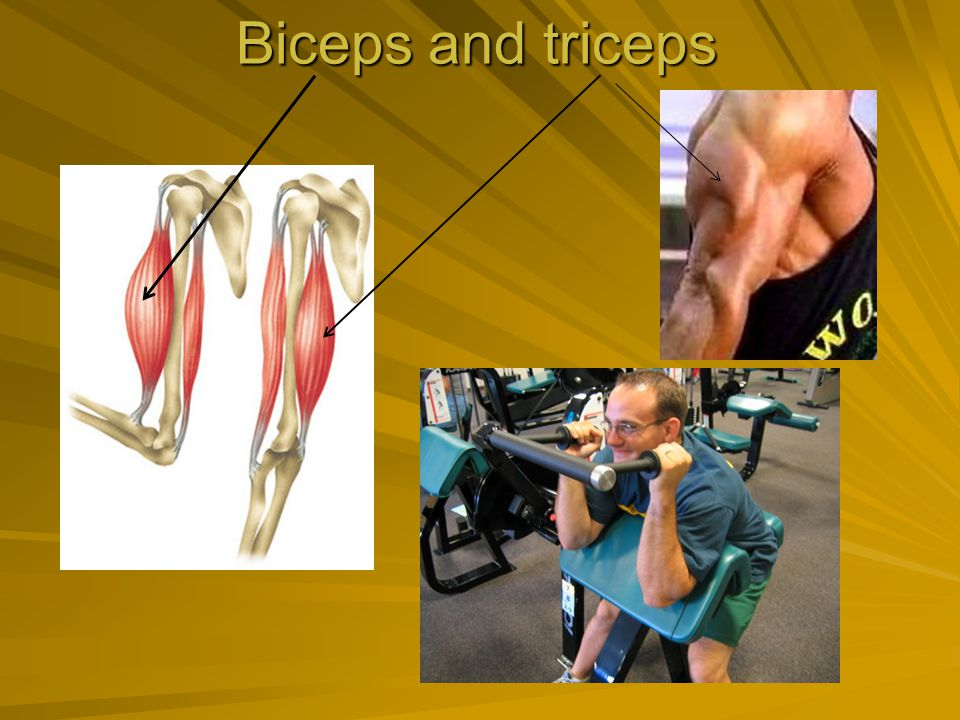 Biceps and triceps