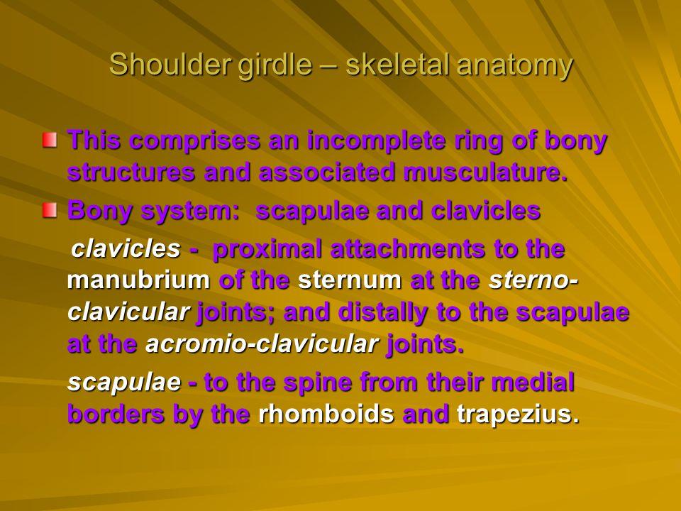 Shoulder girdle – skeletal anatomy