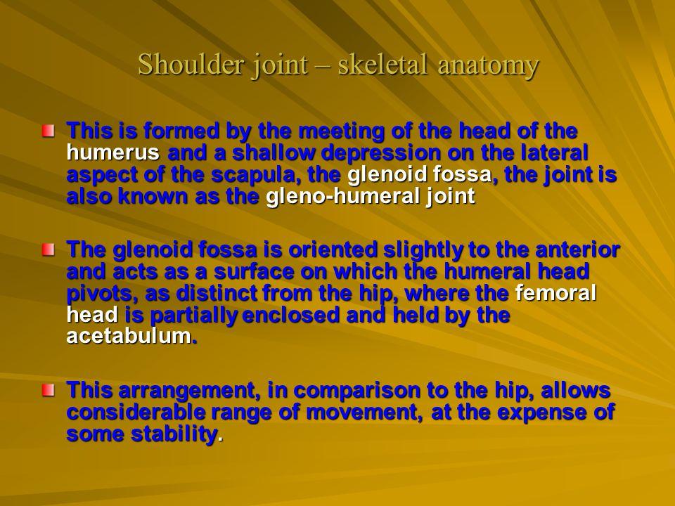 Shoulder joint – skeletal anatomy