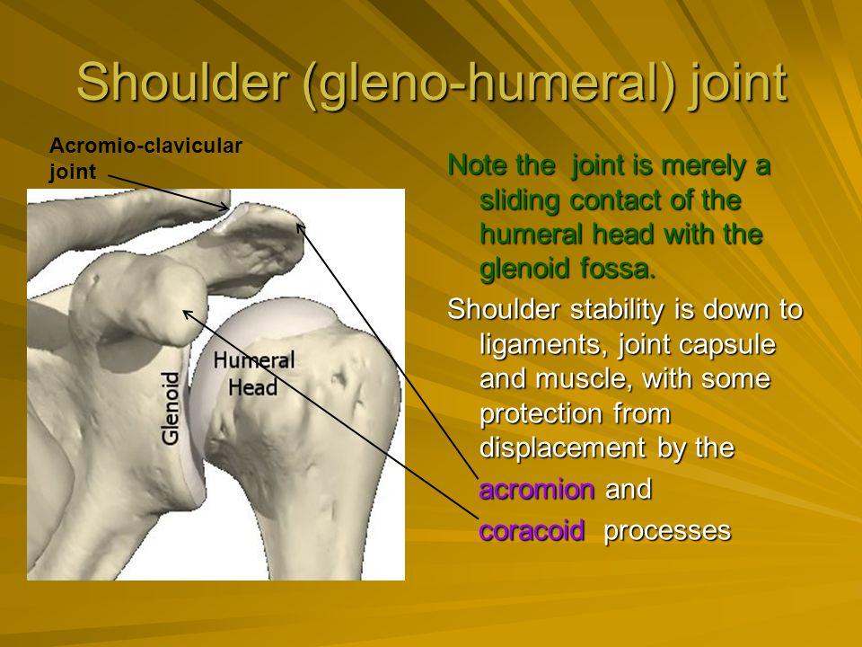 Shoulder (gleno-humeral) joint
