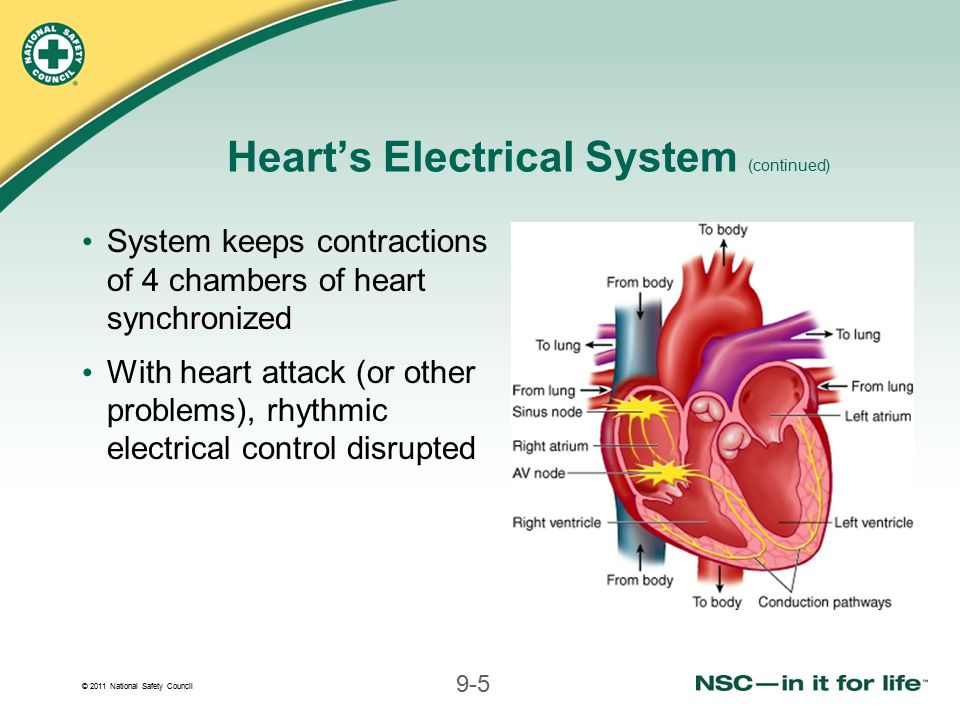 Heart's Electrical System (continued)