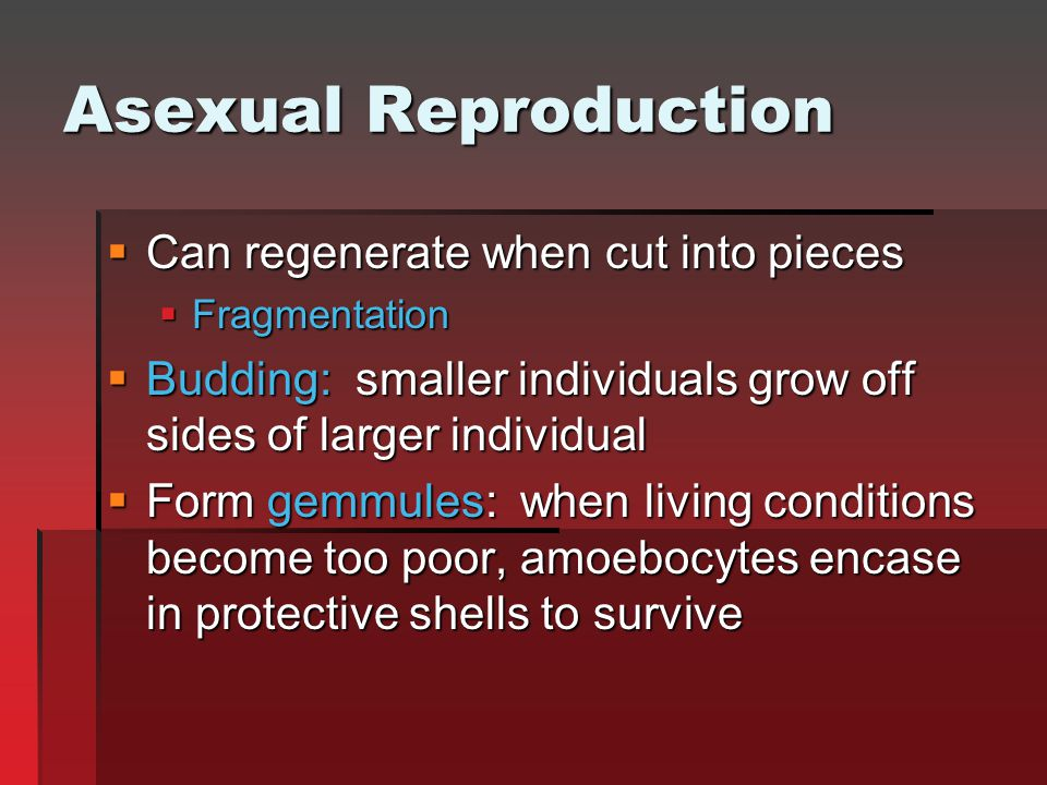 Asexual Reproduction Can regenerate when cut into pieces