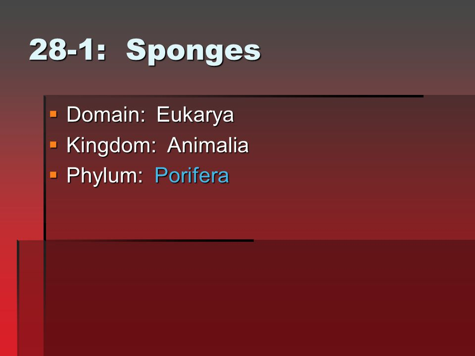28-1: Sponges Domain: Eukarya Kingdom: Animalia Phylum: Porifera