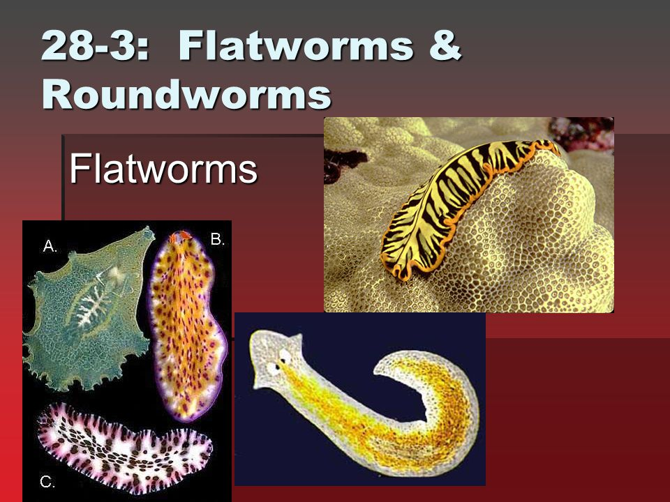 28-3: Flatworms & Roundworms