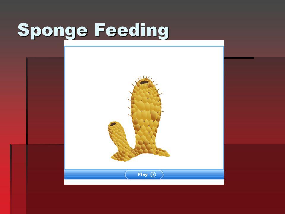 Sponge Feeding