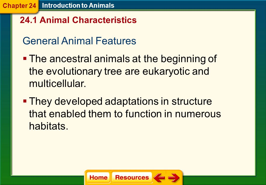 General Animal Features