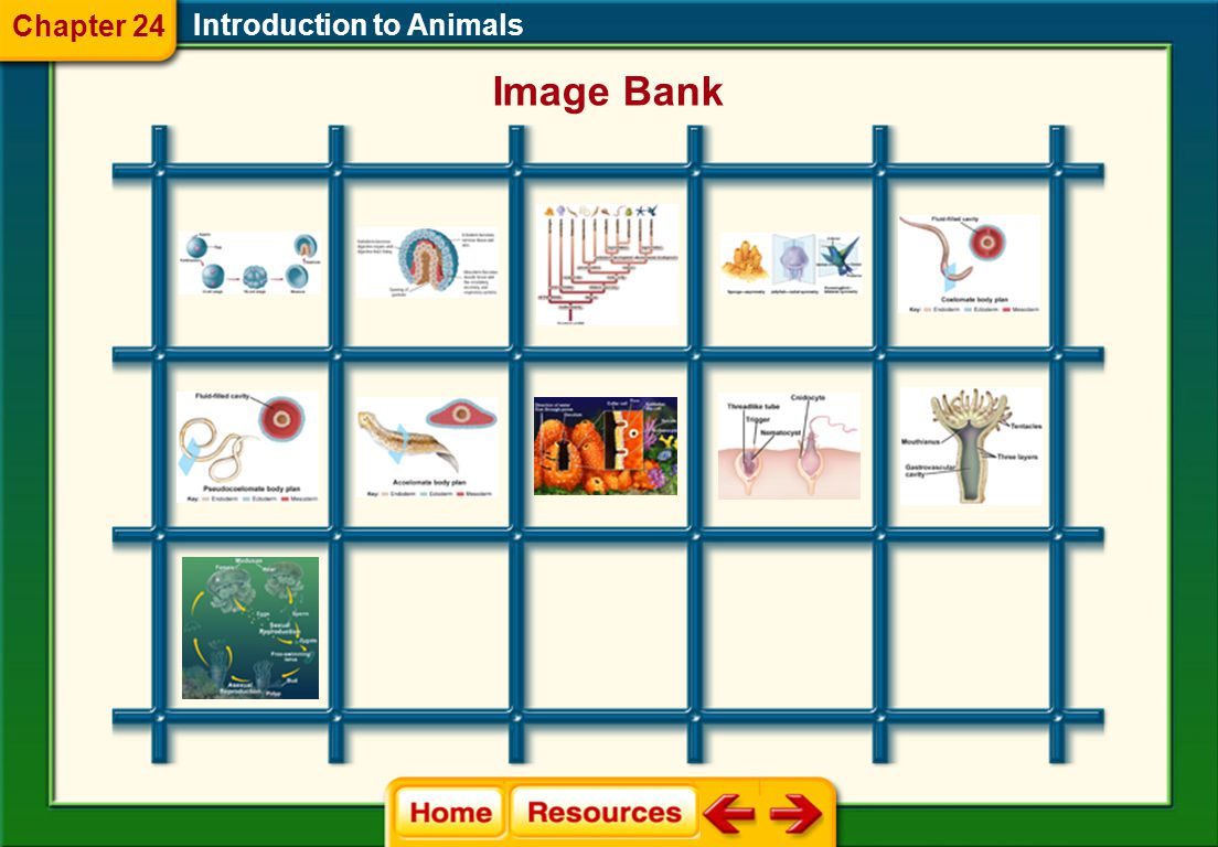 Chapter 24 Introduction to Animals Image Bank