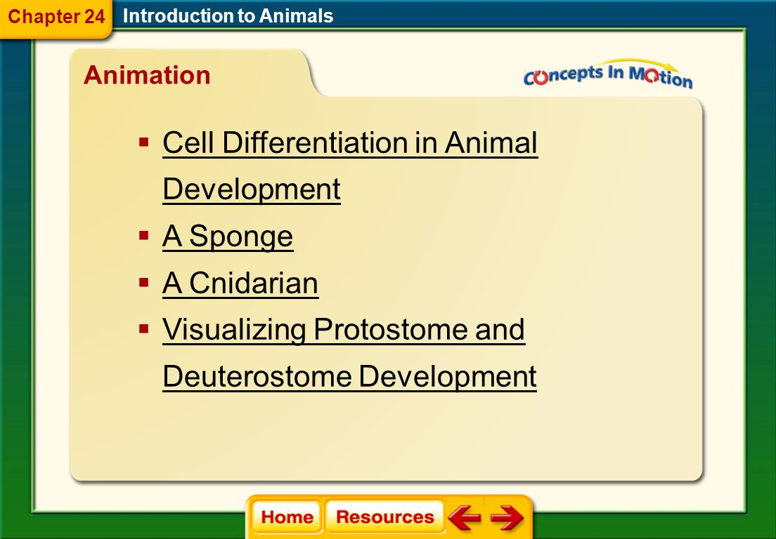 Cell Differentiation in Animal Development