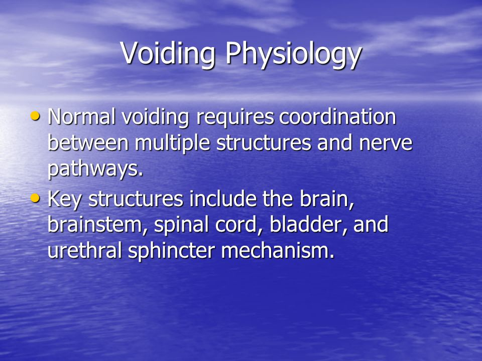 Voiding Physiology Normal voiding requires coordination between multiple structures and nerve pathways.