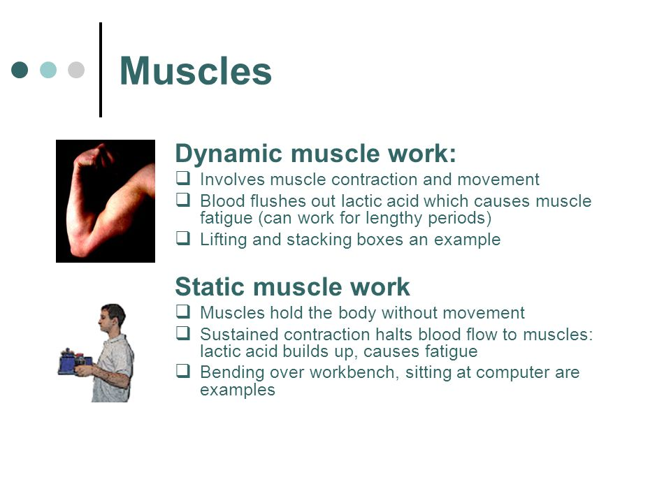 Muscles Dynamic muscle work: Static muscle work