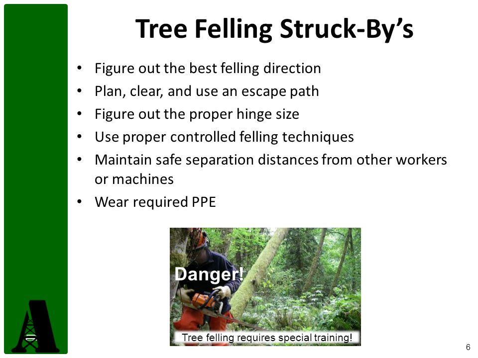 Tree Felling Struck-By's