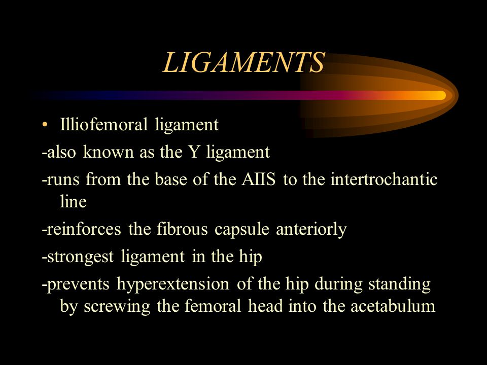 LIGAMENTS Illiofemoral ligament -also known as the Y ligament