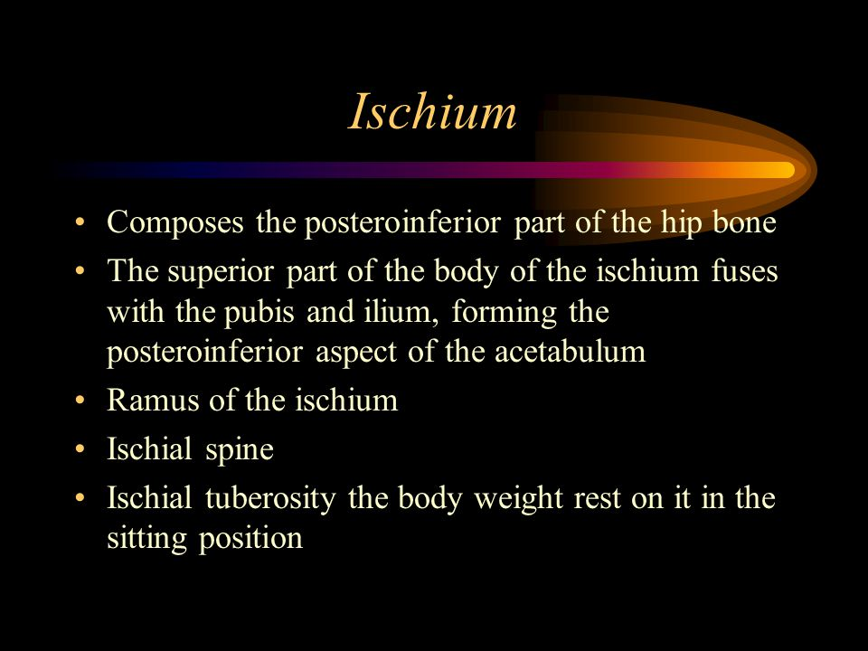 Ischium Composes the posteroinferior part of the hip bone
