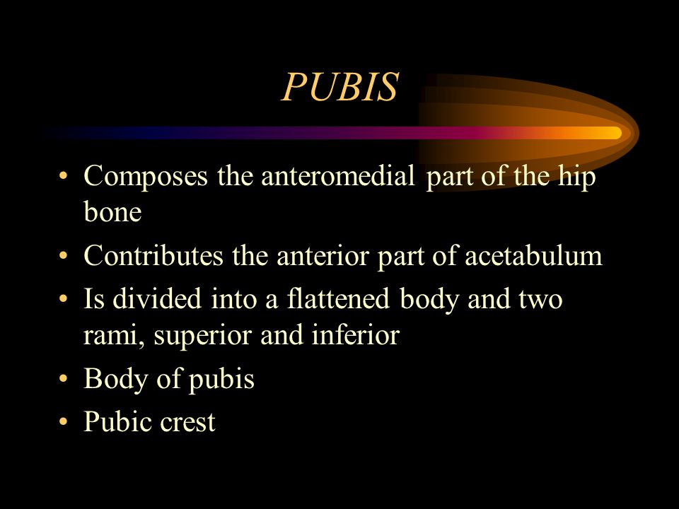 PUBIS Composes the anteromedial part of the hip bone