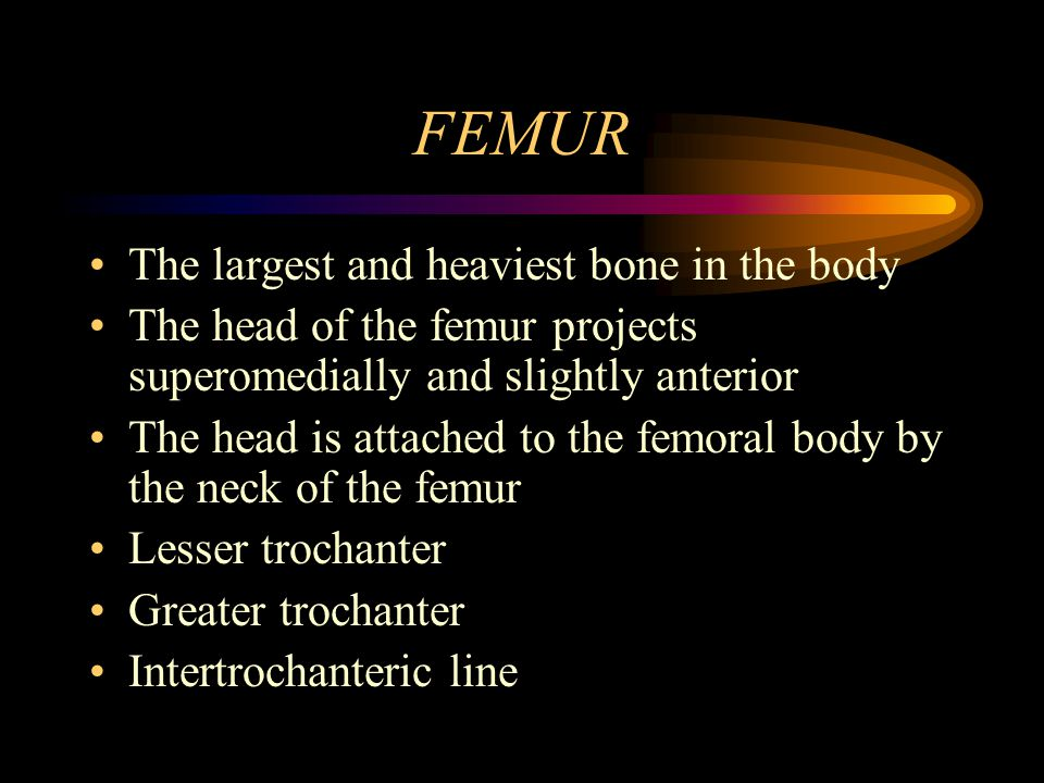 FEMUR The largest and heaviest bone in the body