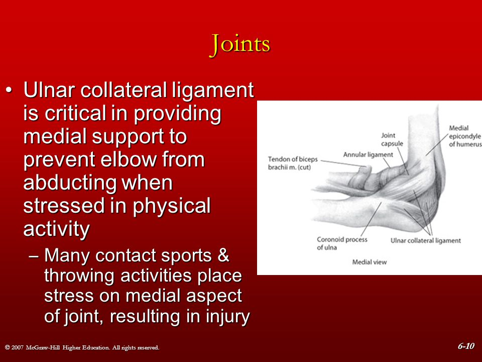 Joints Ulnar collateral ligament is critical in providing medial support to prevent elbow from abducting when stressed in physical activity.
