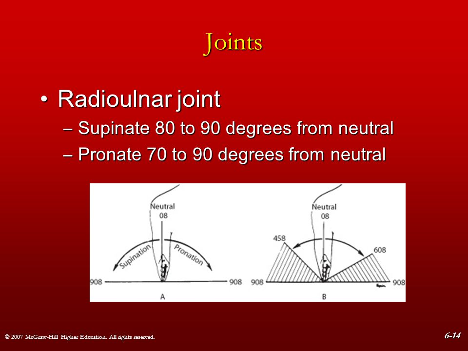 Joints Radioulnar joint Supinate 80 to 90 degrees from neutral