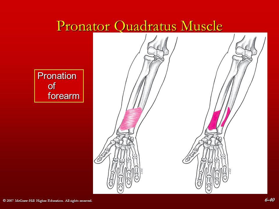 Pronator Quadratus Muscle