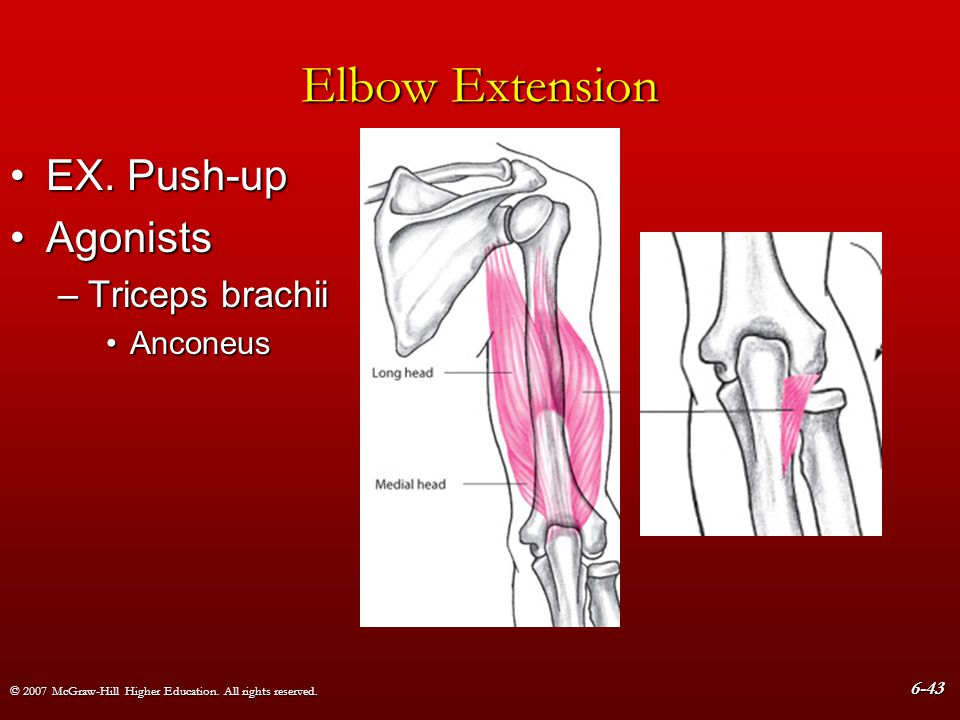 Elbow Extension EX. Push-up Agonists Triceps brachii Anconeus