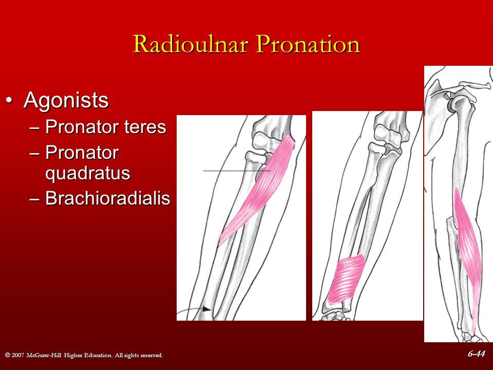 Radioulnar Pronation Agonists Pronator teres Pronator quadratus